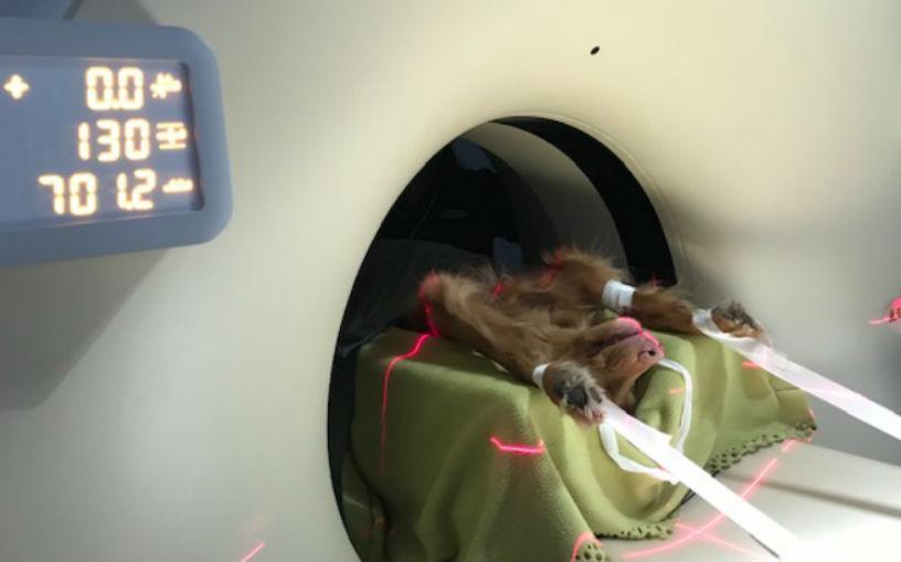 Hund i röntgen
